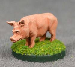 Pig Standing